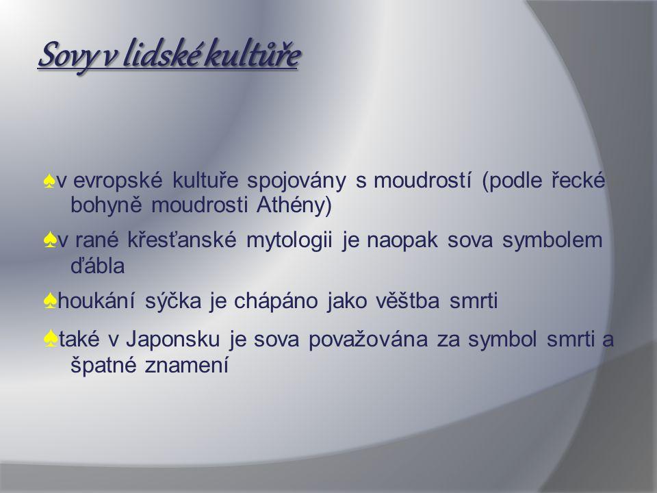 Sovy v lidské kultůře ♠v evropské kultuře spojovány s moudrostí (podle řecké bohyně moudrosti Athény)