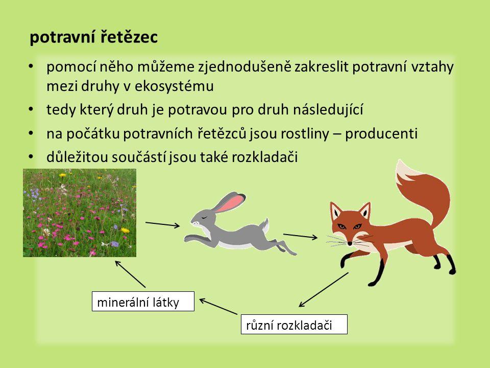 potravní řetězec pomocí něho můžeme zjednodušeně zakreslit potravní vztahy mezi druhy v ekosystému.