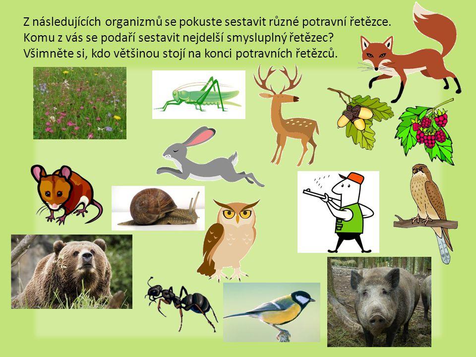 Z následujících organizmů se pokuste sestavit různé potravní řetězce