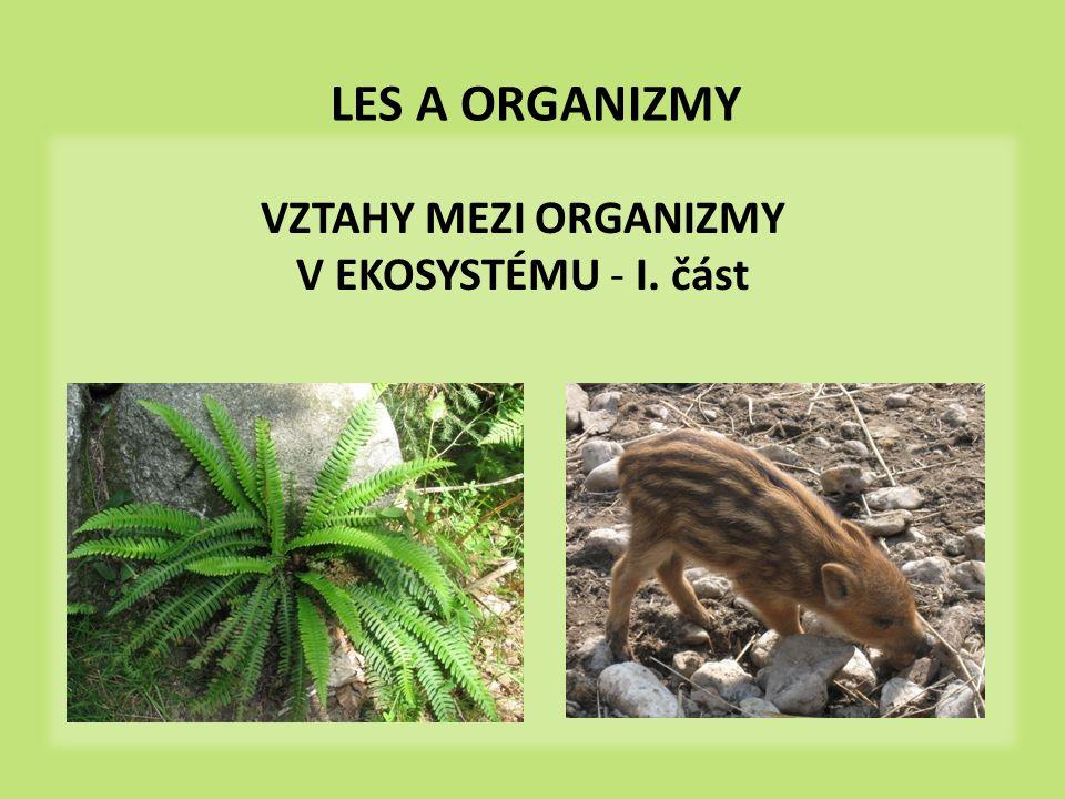 VZTAHY MEZI ORGANIZMY V EKOSYSTÉMU - I. část