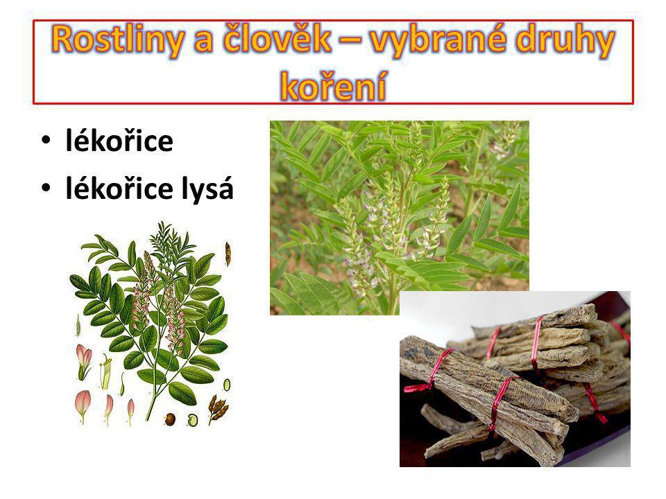 Rostliny a člověk – vybrané druhy koření