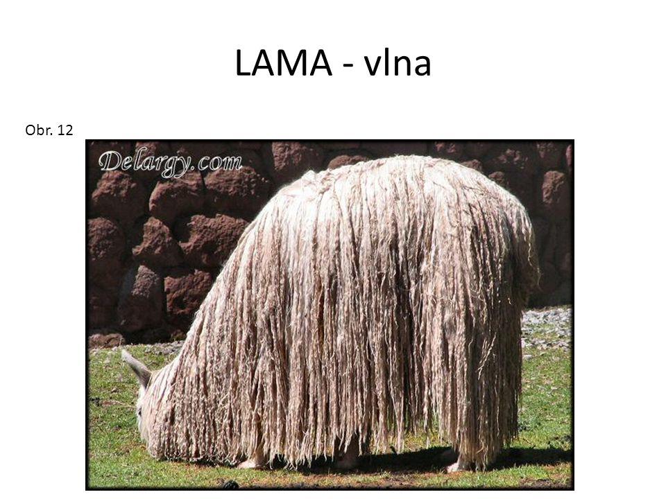 LAMA - vlna Obr. 12