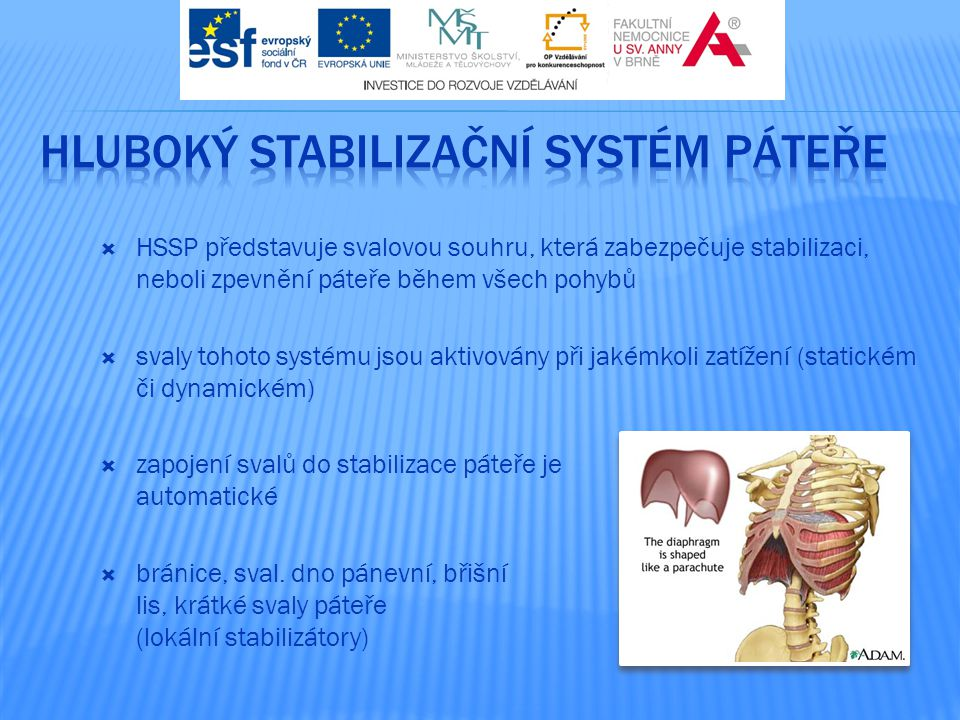 Hluboký stabilizační systém páteře