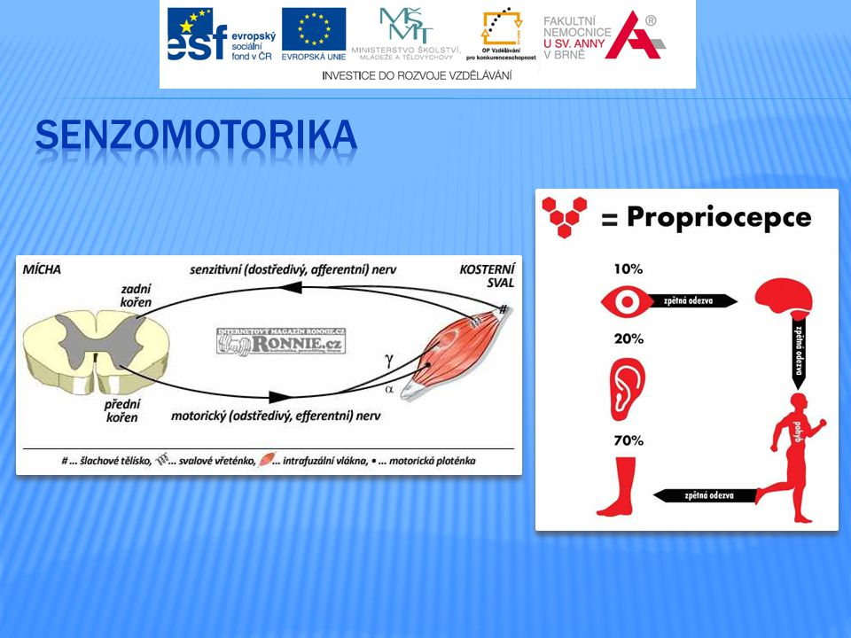 senzomotorika http://medicina.ronnie.cz/c-3838-senzomotorika-iii-dynairy-usece-nestabilni-plochy.html.