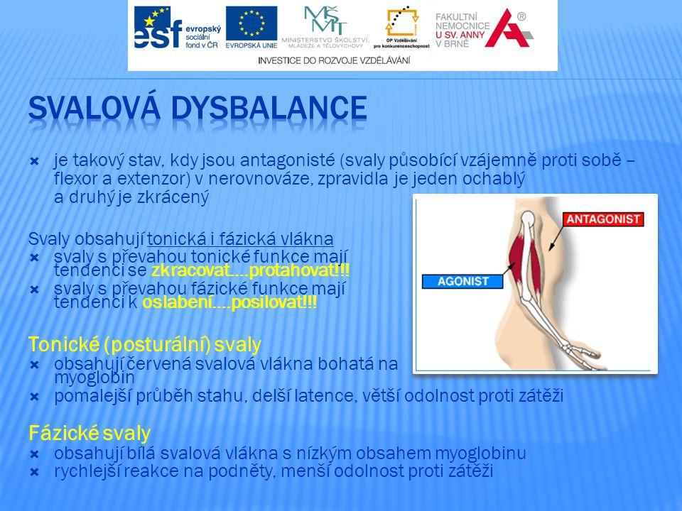 Svalová dysbalance Tonické (posturální) svaly Fázické svaly