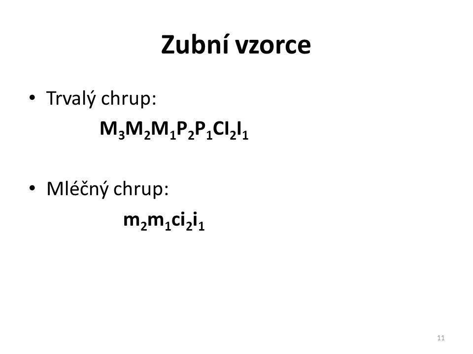 Zubní vzorce Trvalý chrup: M3M2M1P2P1CI2I1 Mléčný chrup: m2m1ci2i1