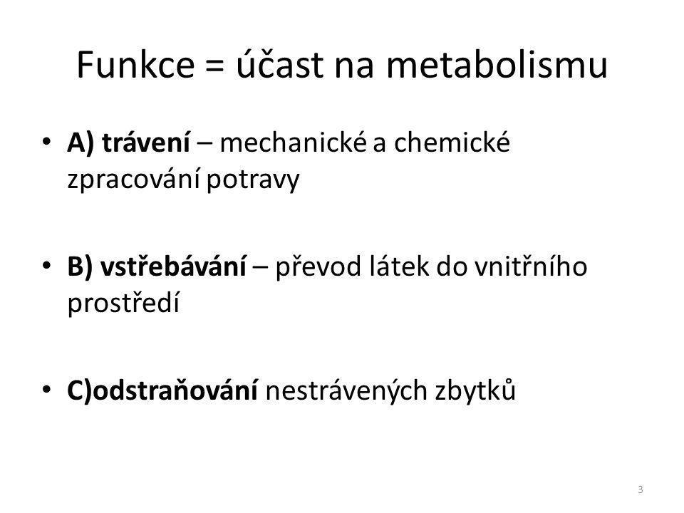 Funkce = účast na metabolismu