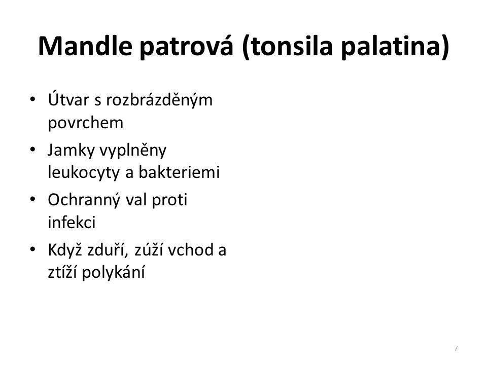 Mandle patrová (tonsila palatina)