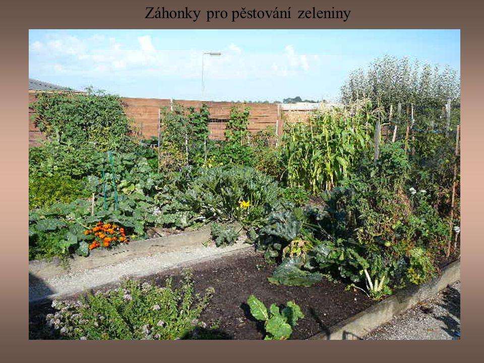 Záhonky pro pěstování zeleniny