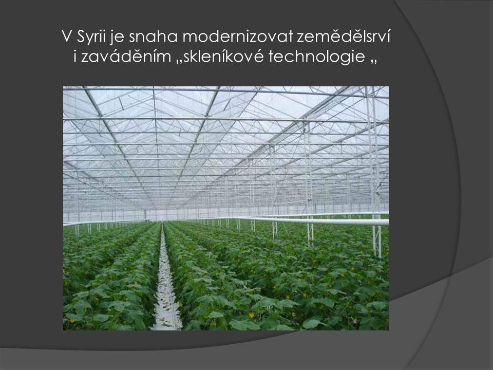 """V Syrii je snaha modernizovat zemědělsrví i zaváděním """"skleníkové technologie """""""