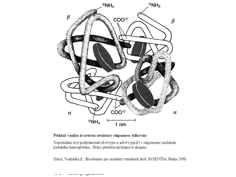 Příklad vzniku kvarterní struktury oligomeru bílkoviny