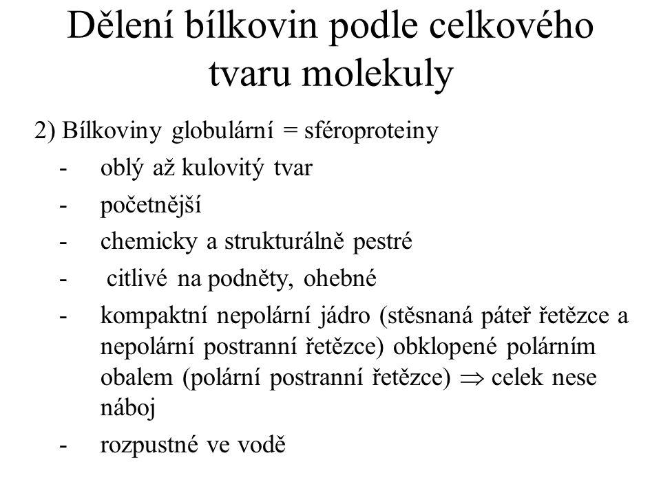Dělení bílkovin podle celkového tvaru molekuly