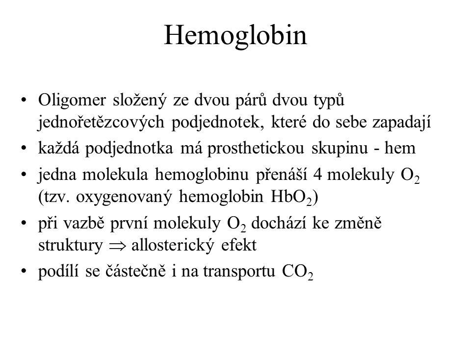 Hemoglobin Oligomer složený ze dvou párů dvou typů jednořetězcových podjednotek, které do sebe zapadají.