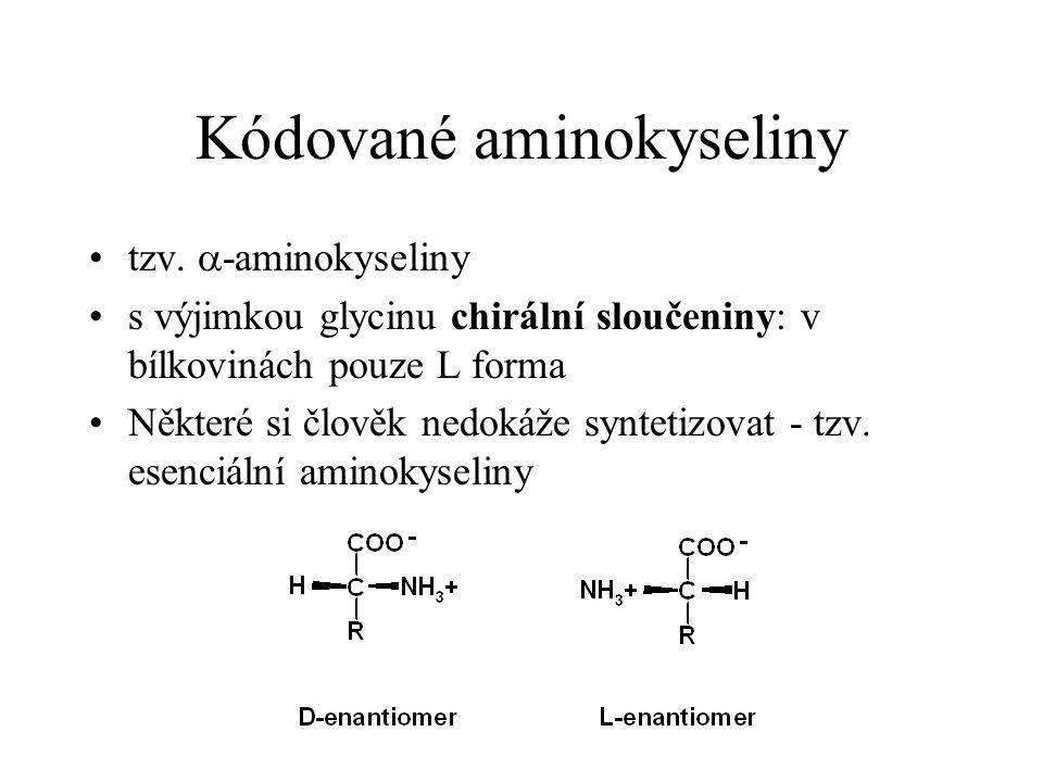 Kódované aminokyseliny