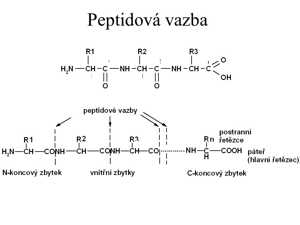 Peptidová vazba