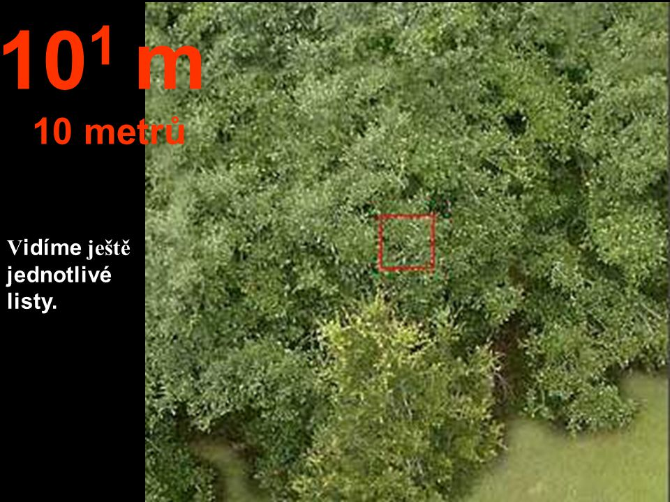 101 m 10 metrů Vidíme ještě jednotlivé listy.