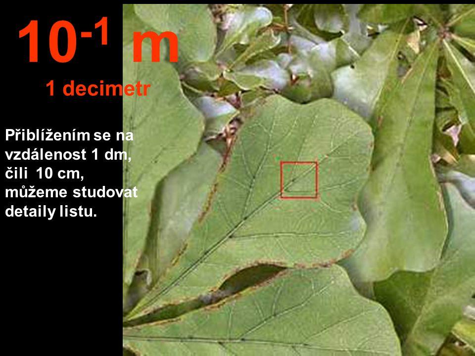 10-1 m 1 decimetr Přiblížením se na vzdálenost 1 dm, čili 10 cm, můžeme studovat detaily listu.