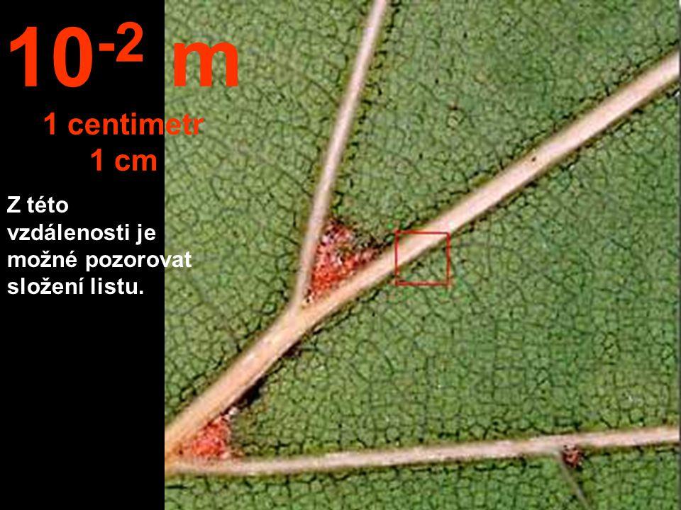 10-2 m 1 centimetr 1 cm Z této vzdálenosti je možné pozorovat složení listu.