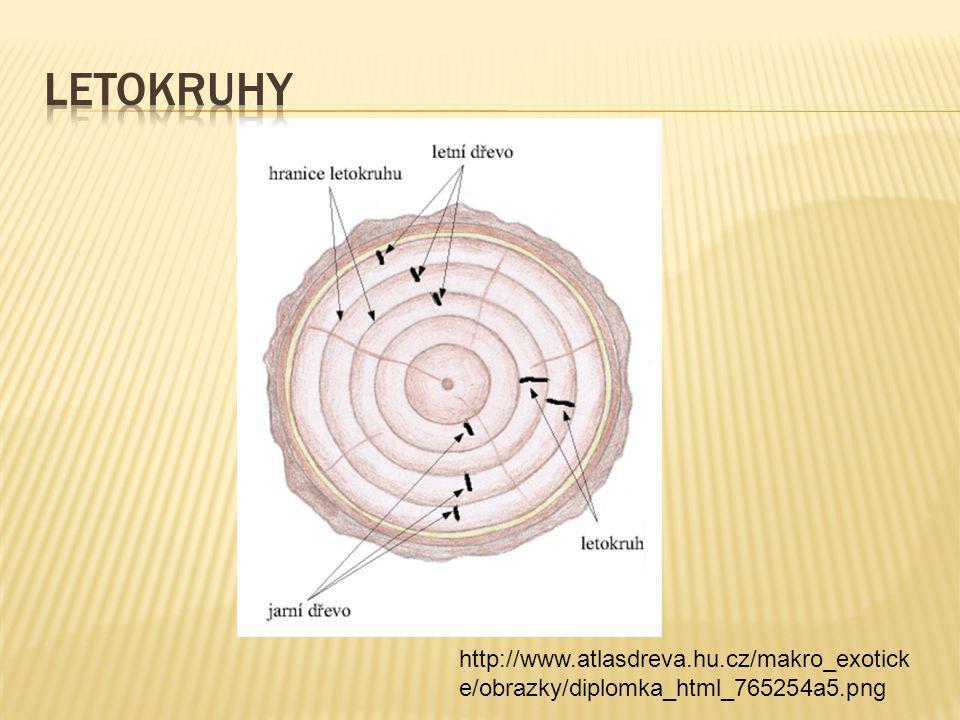 Letokruhy http://www.atlasdreva.hu.cz/makro_exoticke/obrazky/diplomka_html_765254a5.png