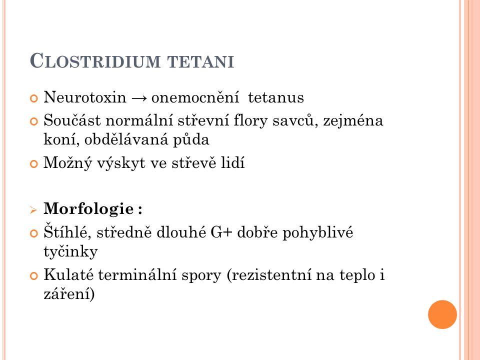 Clostridium tetani Neurotoxin → onemocnění tetanus
