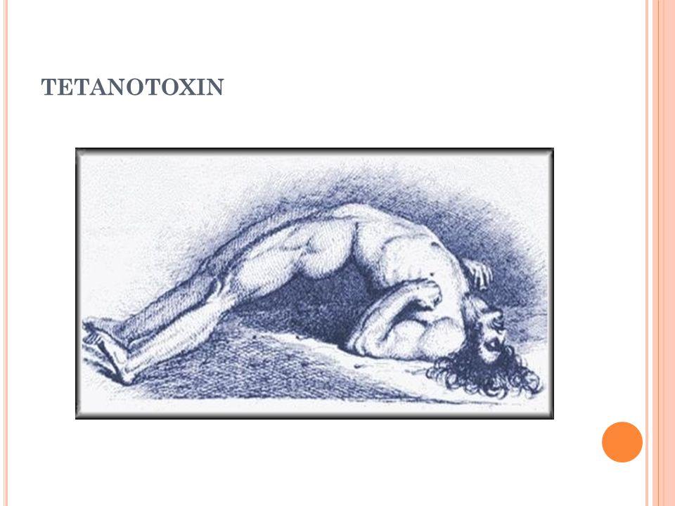 tetanotoxin
