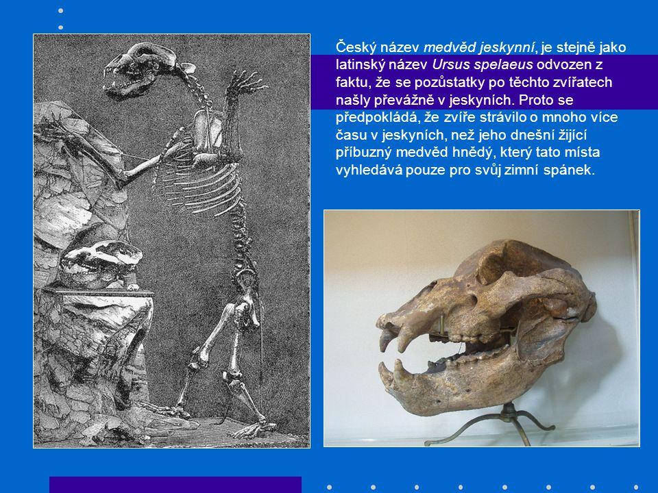 Český název medvěd jeskynní, je stejně jako latinský název Ursus spelaeus odvozen z faktu, že se pozůstatky po těchto zvířatech našly převážně v jeskyních.