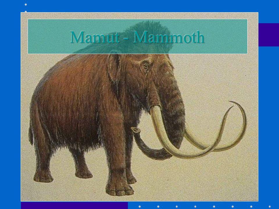 Mamut - Mammoth