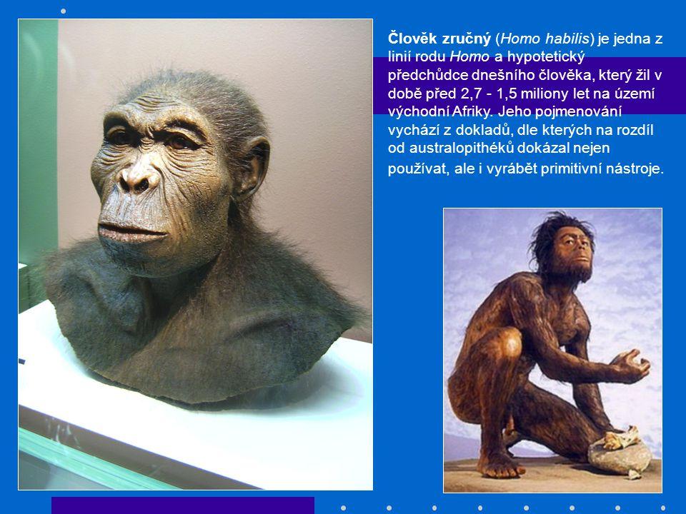 Člověk zručný (Homo habilis) je jedna z linií rodu Homo a hypotetický předchůdce dnešního člověka, který žil v době před 2,7 - 1,5 miliony let na území východní Afriky.