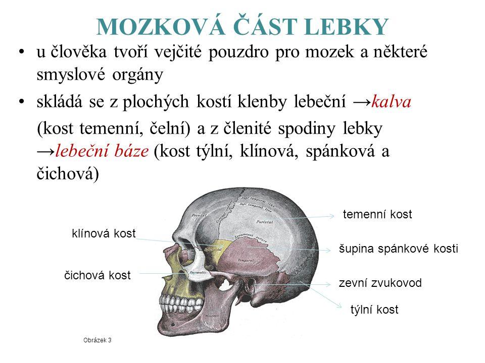 MOZKOVÁ ČÁST LEBKY u člověka tvoří vejčité pouzdro pro mozek a některé smyslové orgány. skládá se z plochých kostí klenby lebeční →kalva.