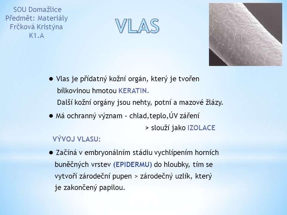VLAS ● Vlas je přídatný kožní orgán, který je tvořen