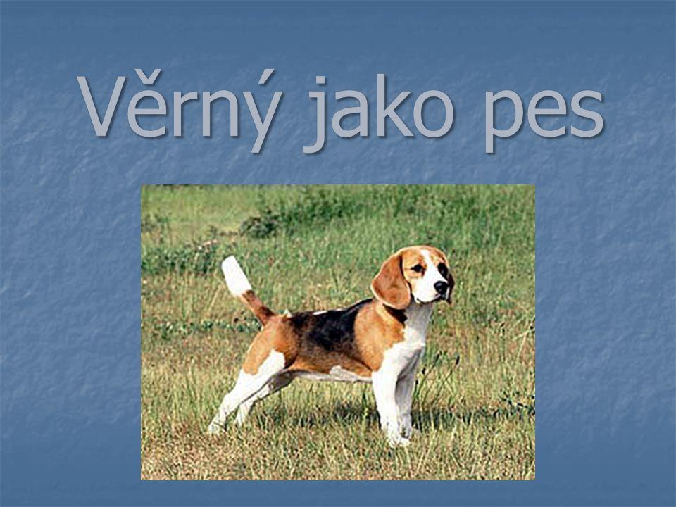 Věrný jako pes