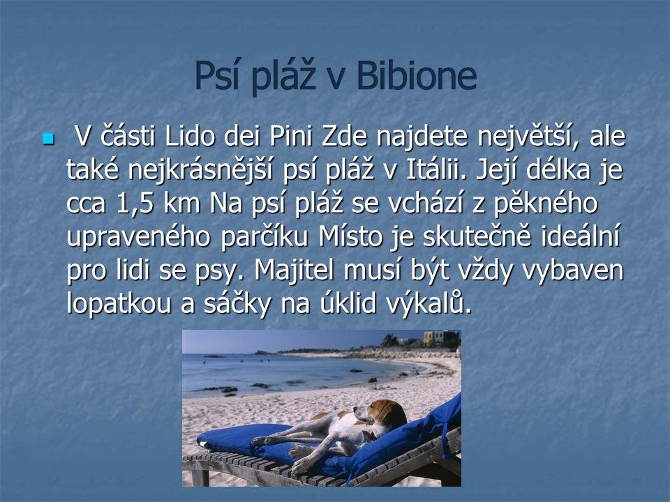 Psí pláž v Bibione