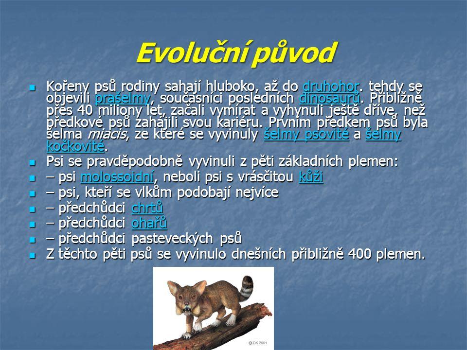 Evoluční původ