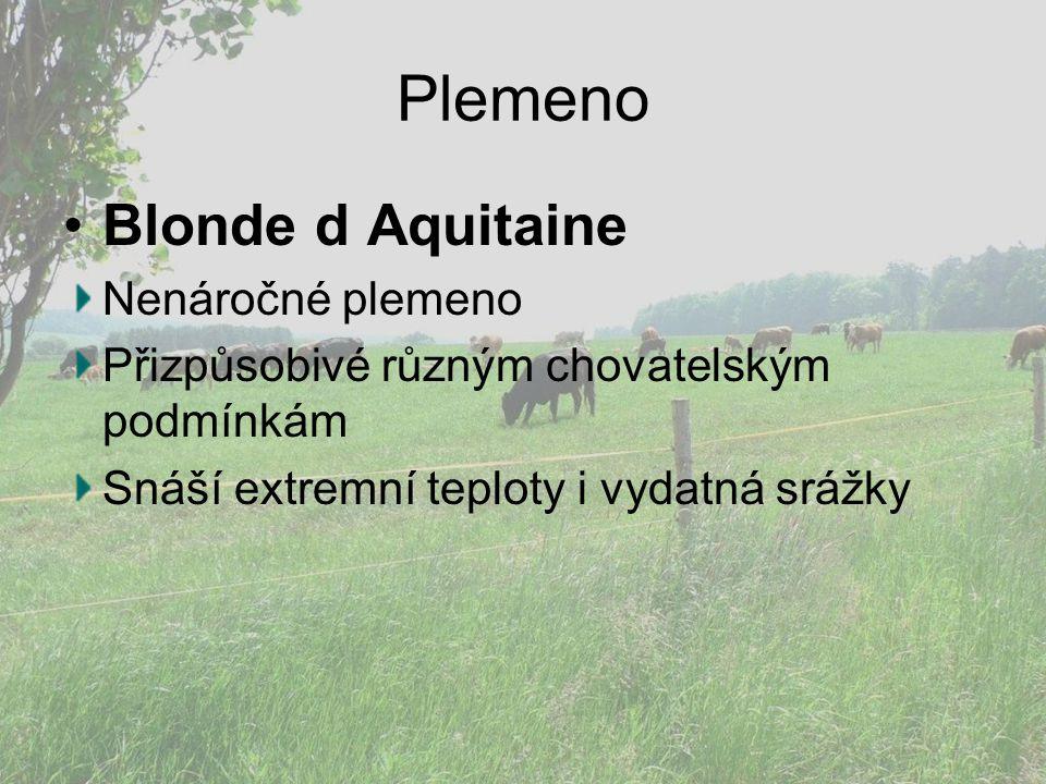 Plemeno Blonde d Aquitaine Nenáročné plemeno