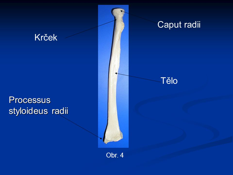 Processus styloideus radii