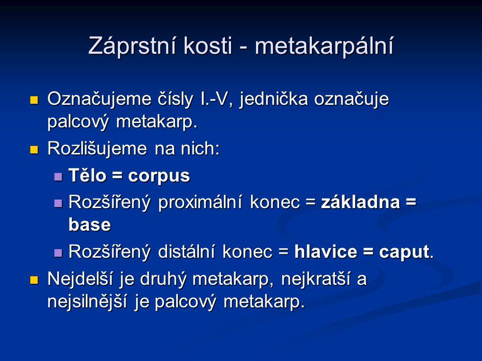 Záprstní kosti - metakarpální
