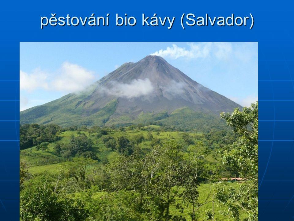 pěstování bio kávy (Salvador)