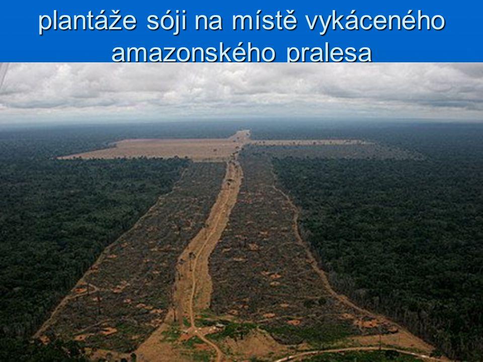 plantáže sóji na místě vykáceného amazonského pralesa