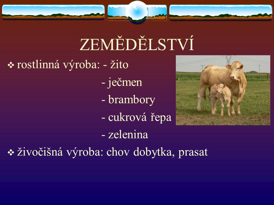 ZEMĚDĚLSTVÍ rostlinná výroba: - žito - ječmen - brambory