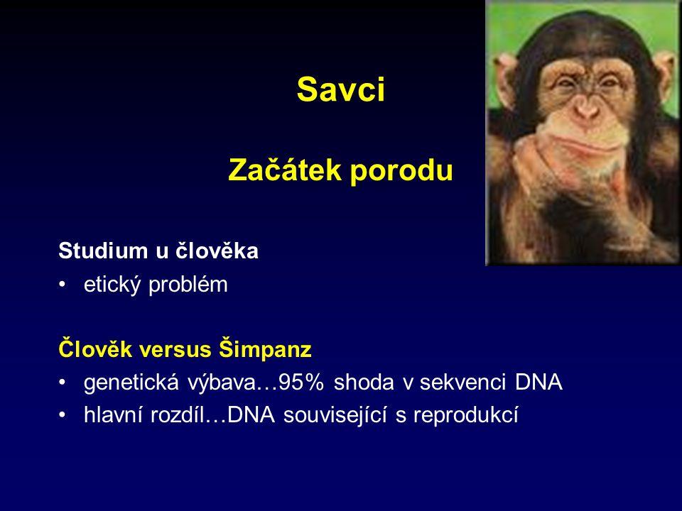 Savci Začátek porodu Studium u člověka etický problém