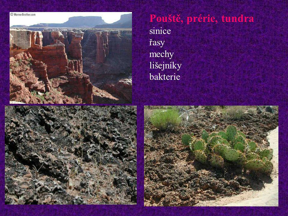 Pouště, prérie, tundra sinice řasy mechy lišejníky bakterie