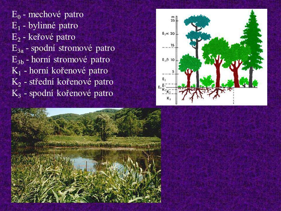 E0 - mechové patro E1 - bylinné patro. E2 - keřové patro. E3a - spodní stromové patro. E3b - horní stromové patro.