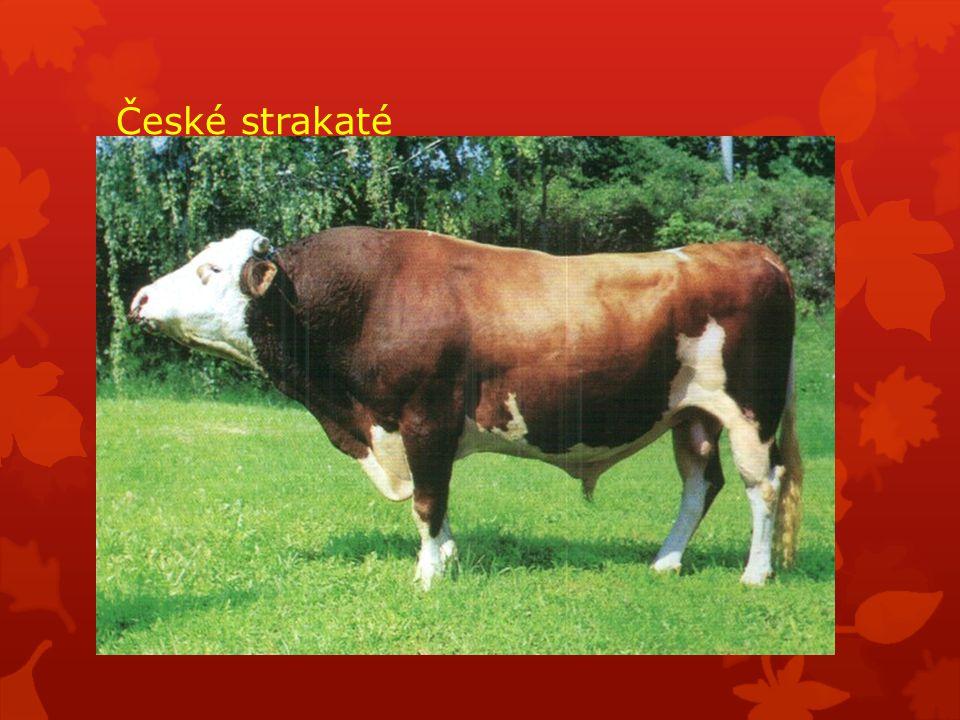 České strakaté