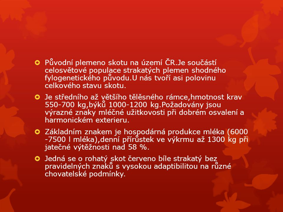 Původní plemeno skotu na území ČR