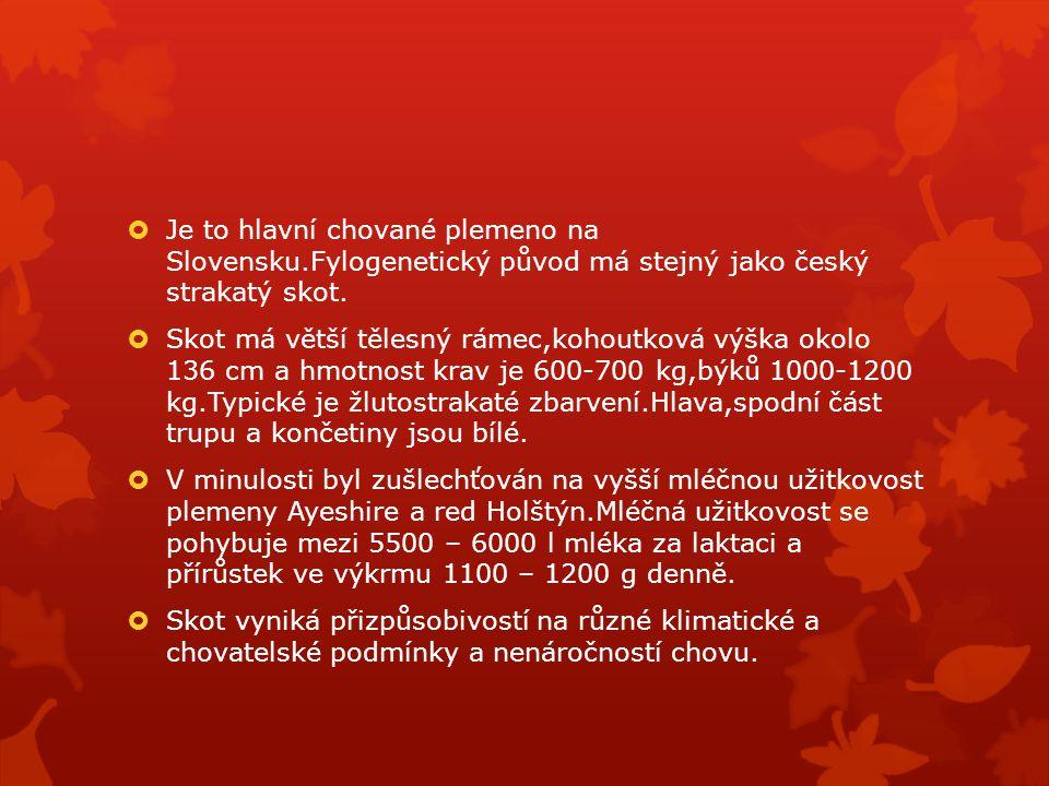 Je to hlavní chované plemeno na Slovensku