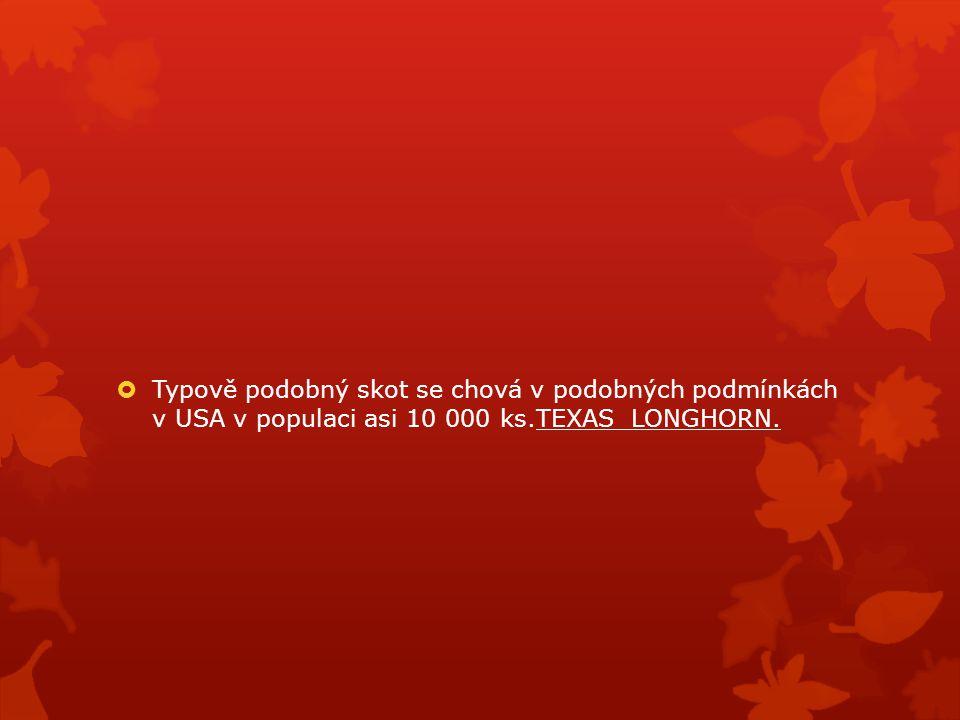 Typově podobný skot se chová v podobných podmínkách v USA v populaci asi 10 000 ks.TEXAS LONGHORN.