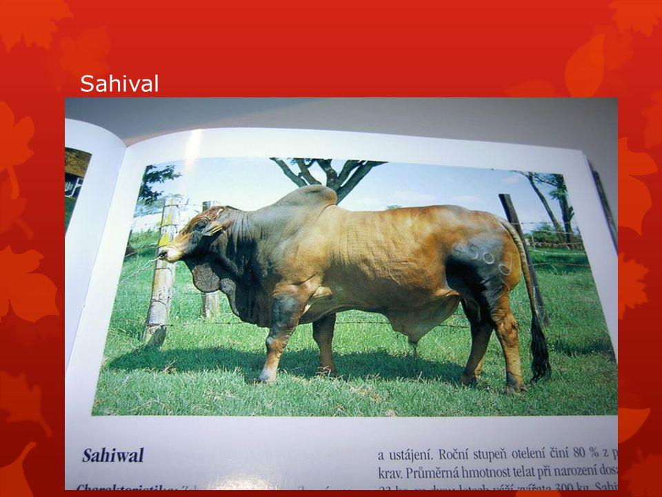 Sahival