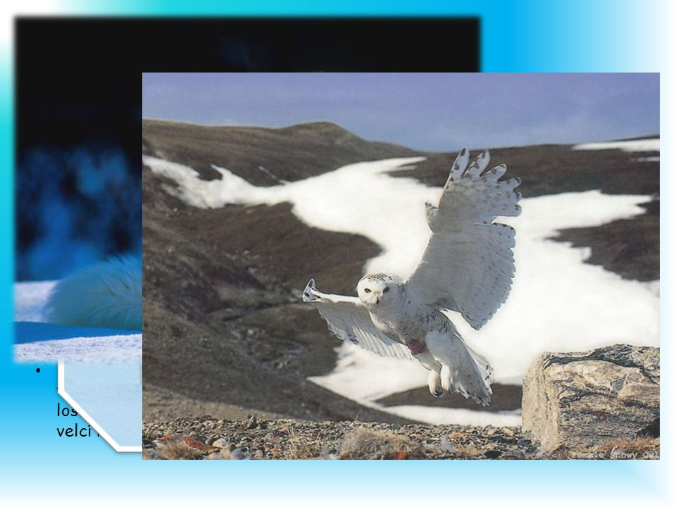 Fauna Živočišstvo je v Arktidě chudé, ale bohatší než v Antarktidě.