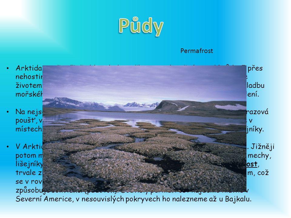 Arktida je převážně oblast ledu, sněhu a nezalesněné zmrzlé půdy