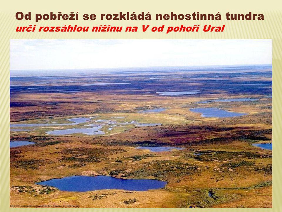 Od pobřeží se rozkládá nehostinná tundra